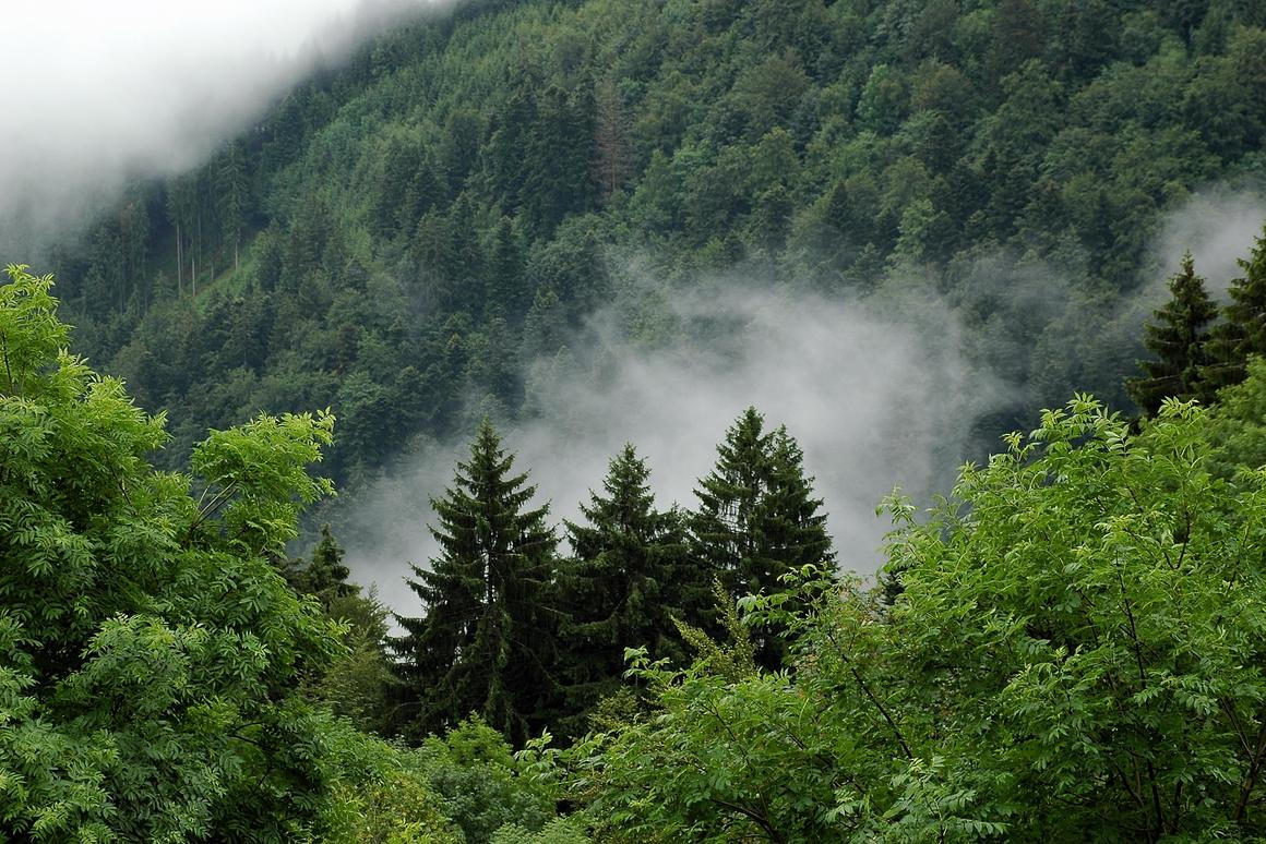 A new study has found that in response to increasing rates of human-induced CO2 in the atmosphere, the Earth's vegetation has increased the rate at which it absorbs carbon