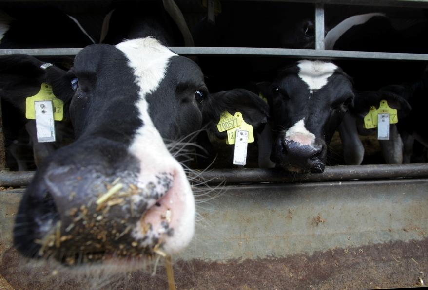 Electronic ears tags are being used to check on the well-being of cattle