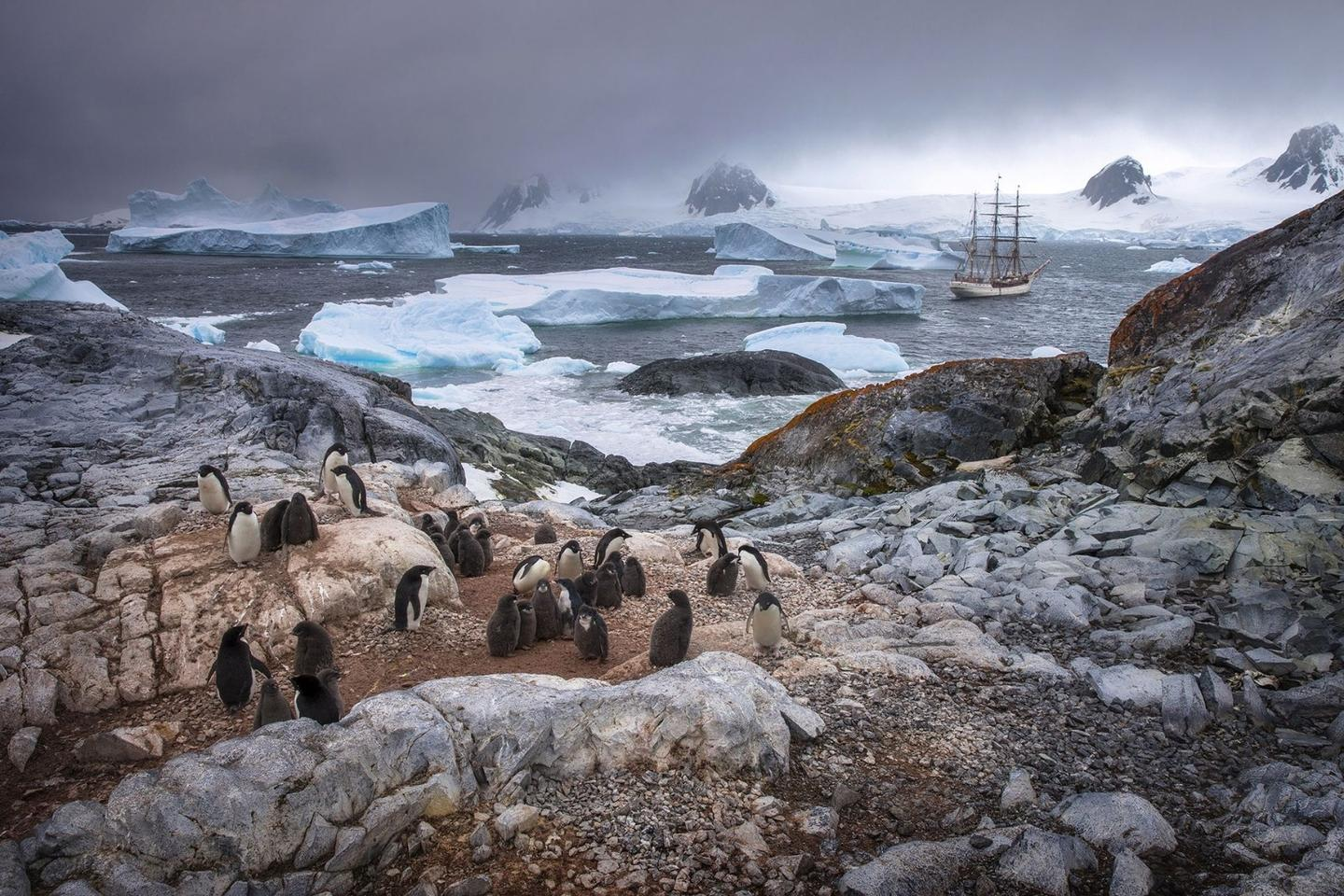 Honorable Mention in The Beauty of Nature. Adélie Penguins in their native habitat on Yalour Islands