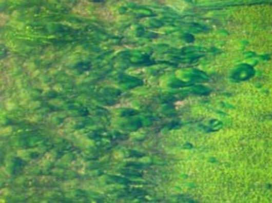 OrignOil patents technology for large scale algae oil production