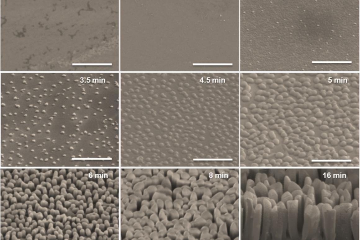 "An array of nanoscale pillars (""nanograss"") structure could make organic solar cells more efficient by capturing light (Image: UMass Amherst)"