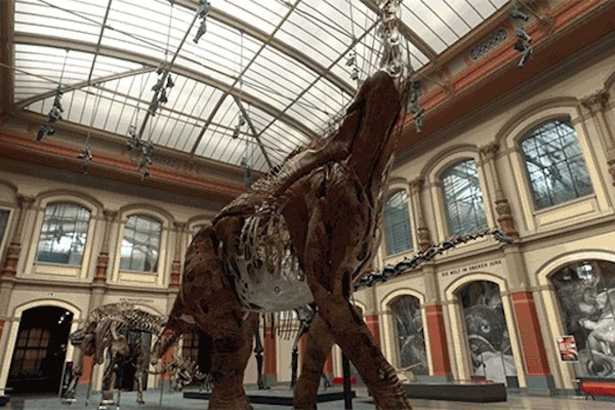 Partnering with over 50 natural history institutions, Google has added a host of new virtual tours, exhibitions, photos and videos to its Arts and Culture collection, all viewable online
