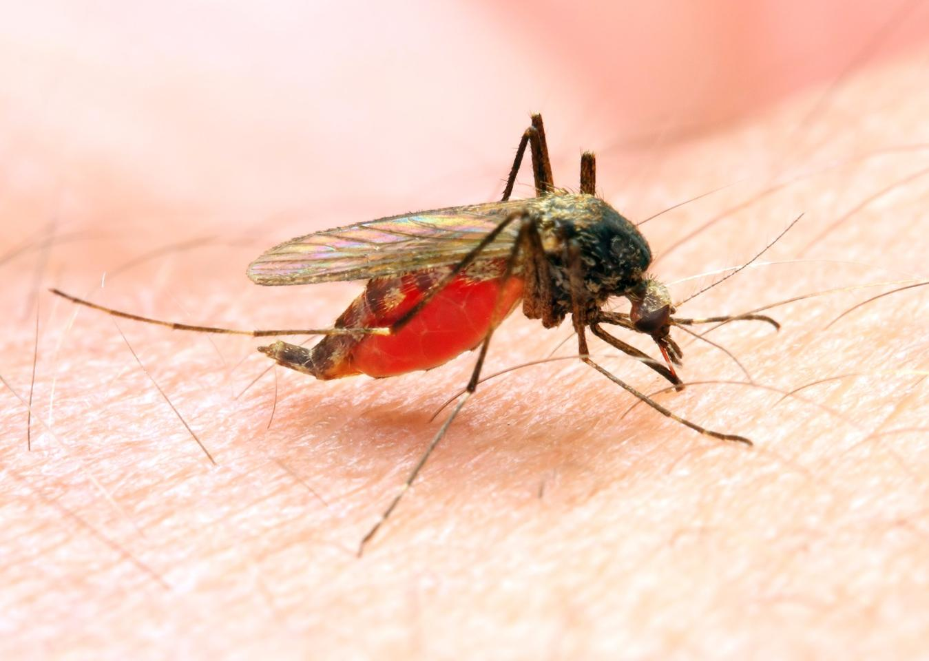 The hunt for a malaria vaccine has turned up a promising approach to tackling cancer