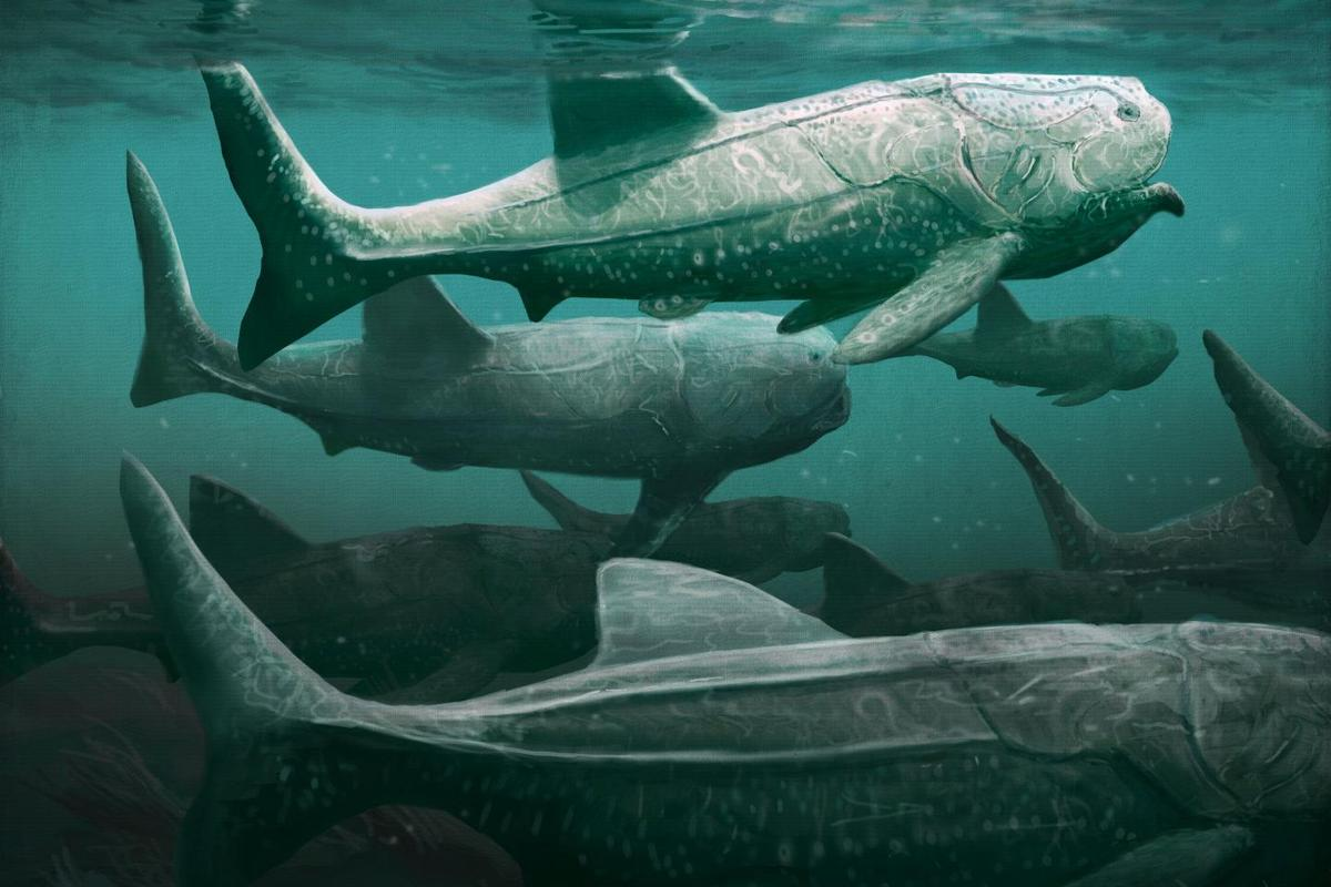 An artist's impression of Titanichthys