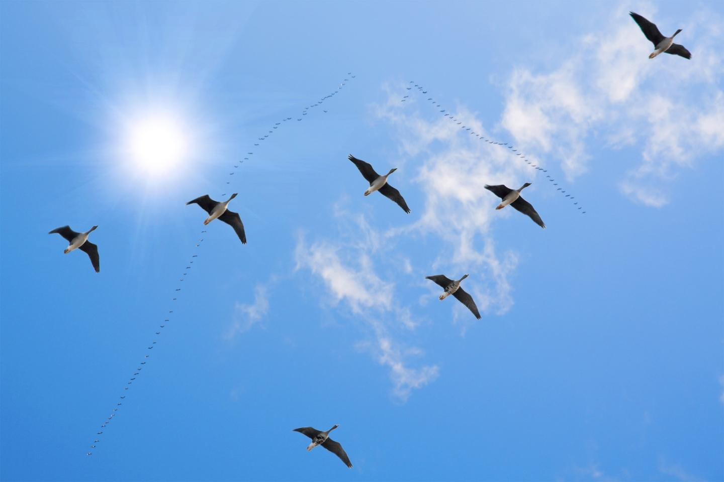 The ICARUS program plans to uses tagged animals to learn more about biodiversity, plus much more