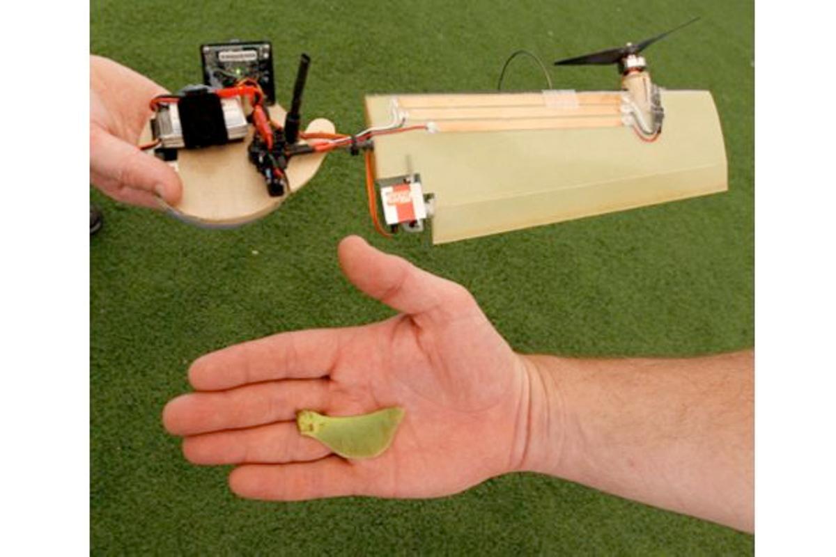 Lockheed Martin's Samarai Flyer monocopter micro air vehicle, alongside a maple seed