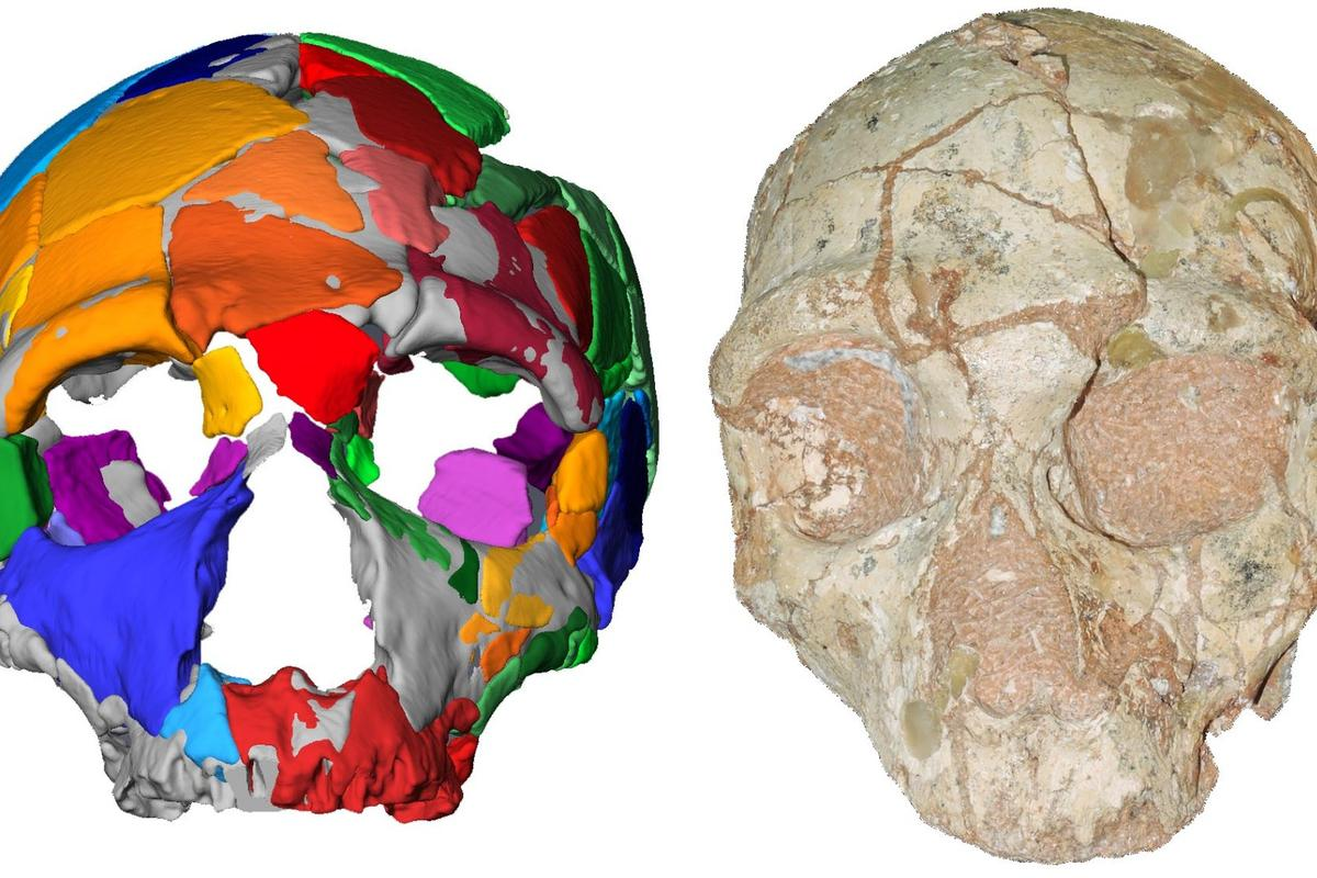 The Apidima 2 skull (right) along with its digital reconstruction (left)