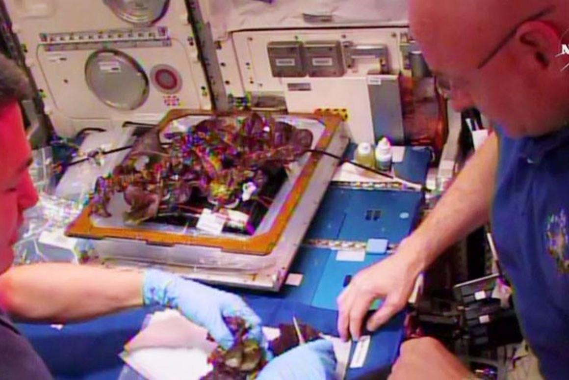 Lettuce grown on the International Space Station being prepared for lunch