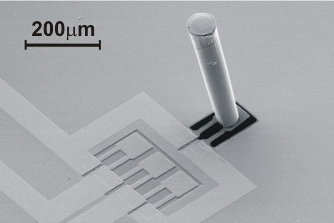 Scanning electron micrograph of an artificial neuromast