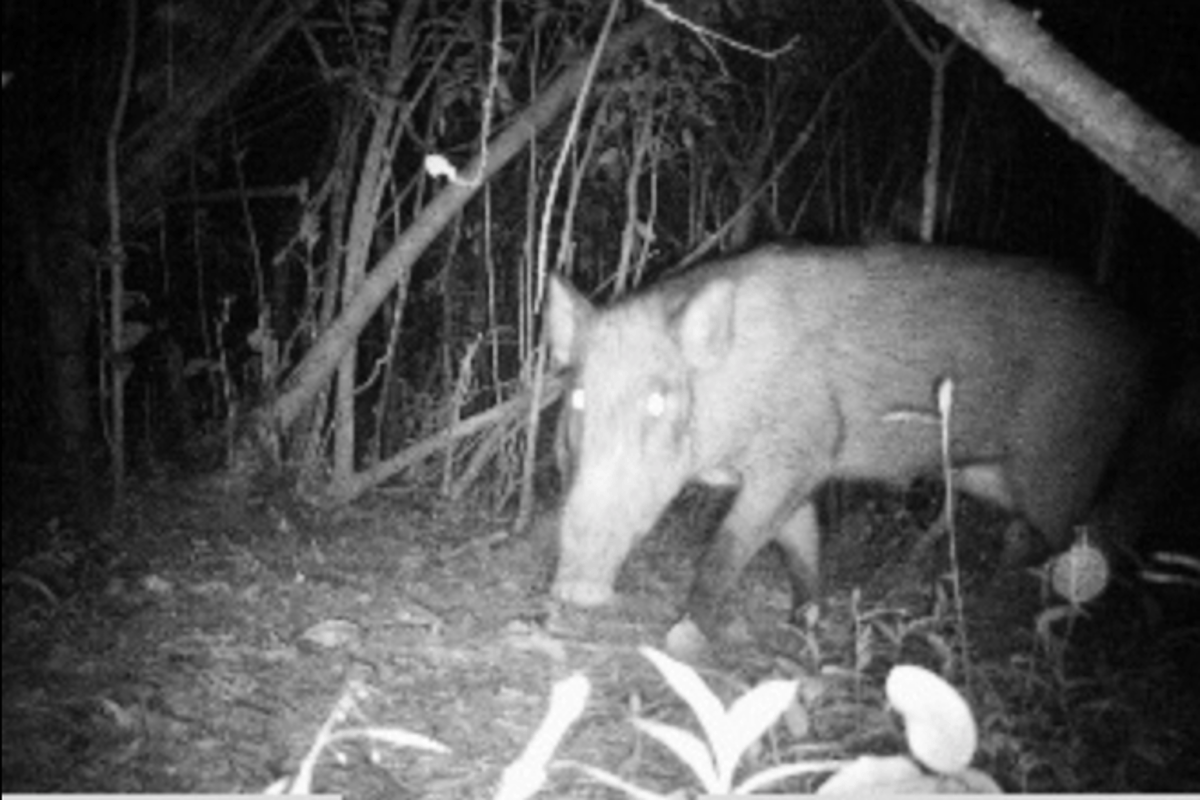 Instant Wild is a conservation app that sends photos of wild animals to users' iPhones, as those animals trigger camera traps in the wild