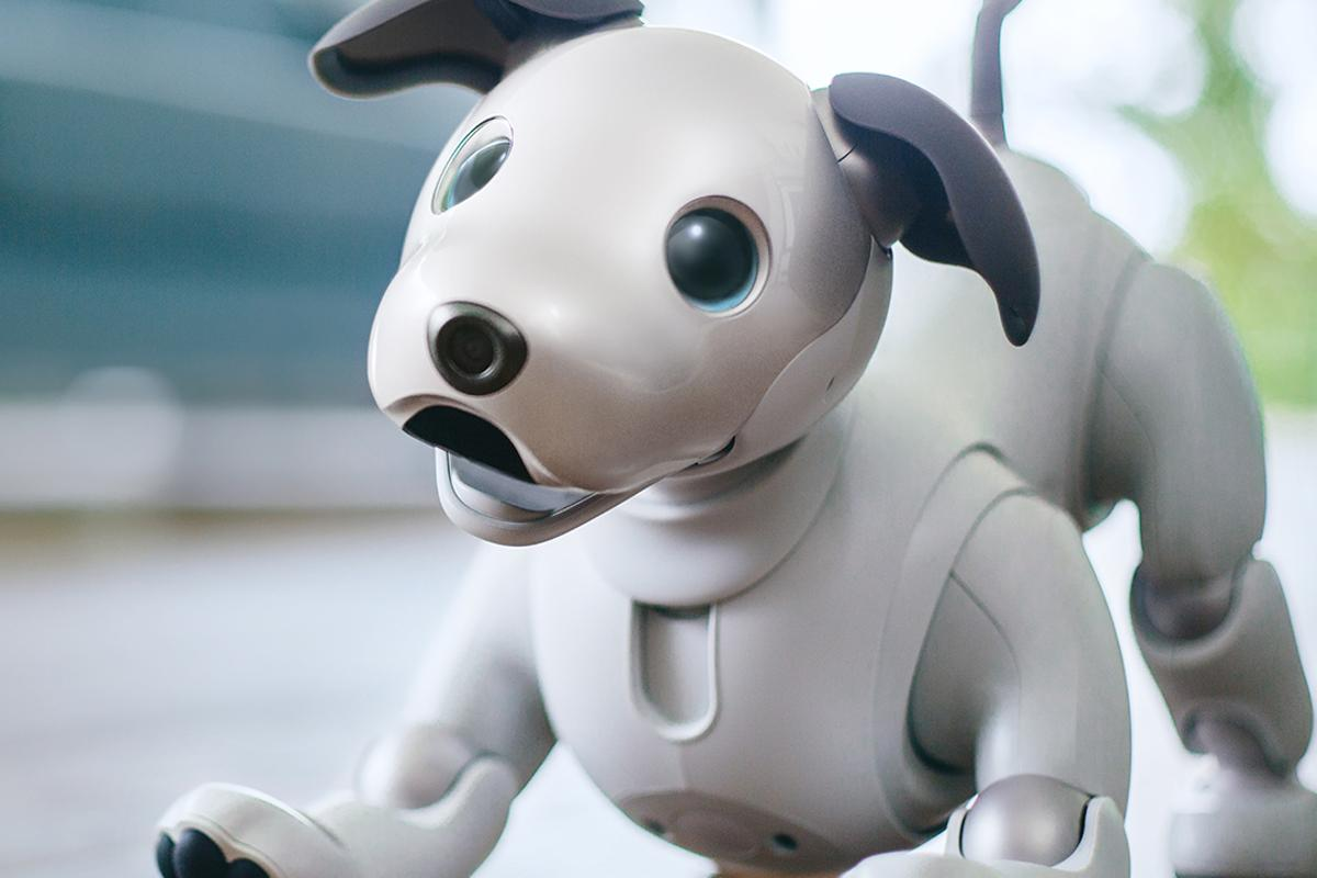 After more than 10 years in the dog house, Sony has brought back its aibo robot companion - albeit in Japan only