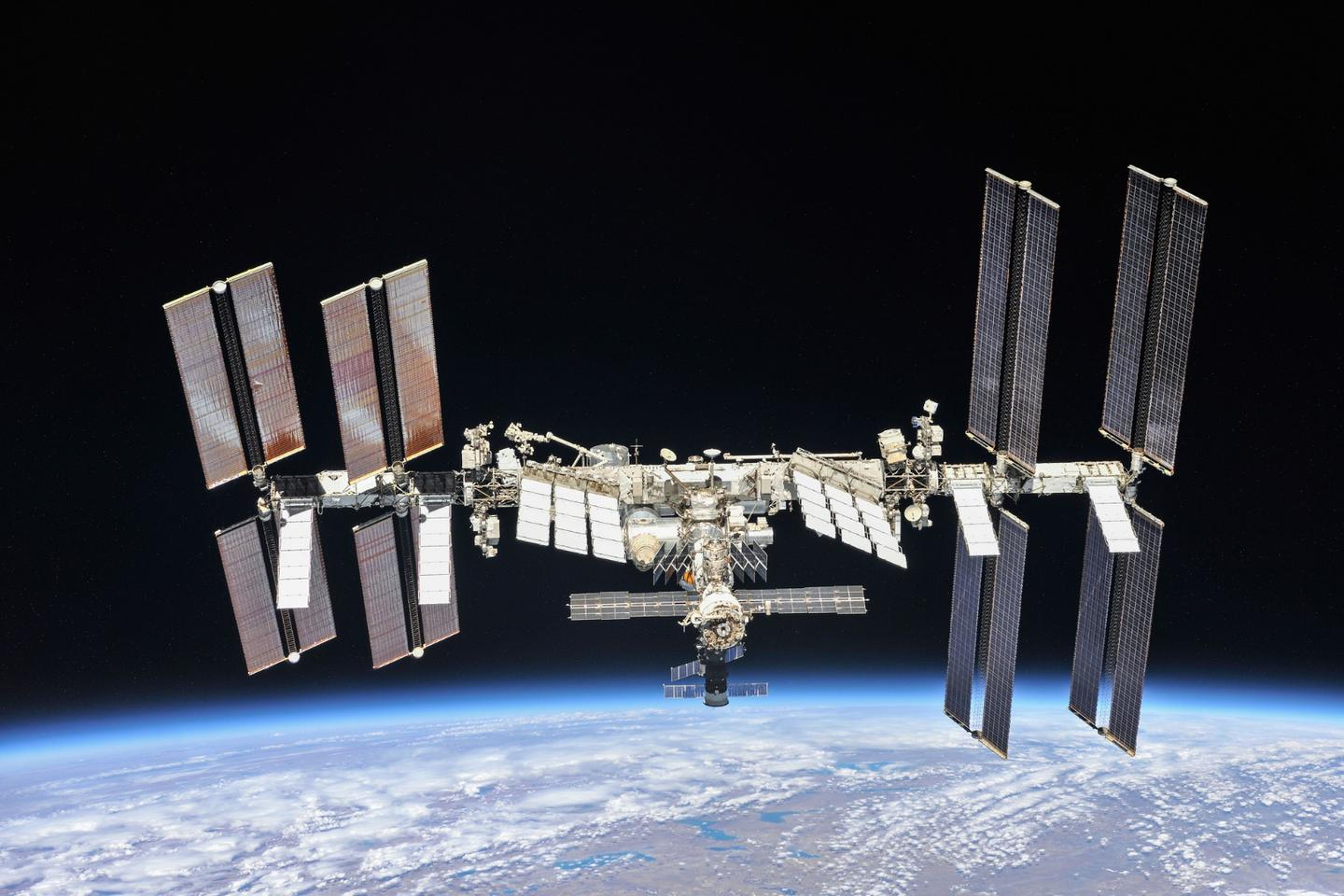 """So called """"""""Mighty Mice"""" were among a group of rodents who enjoyed a 33-day stay aboard the International Space Station"""