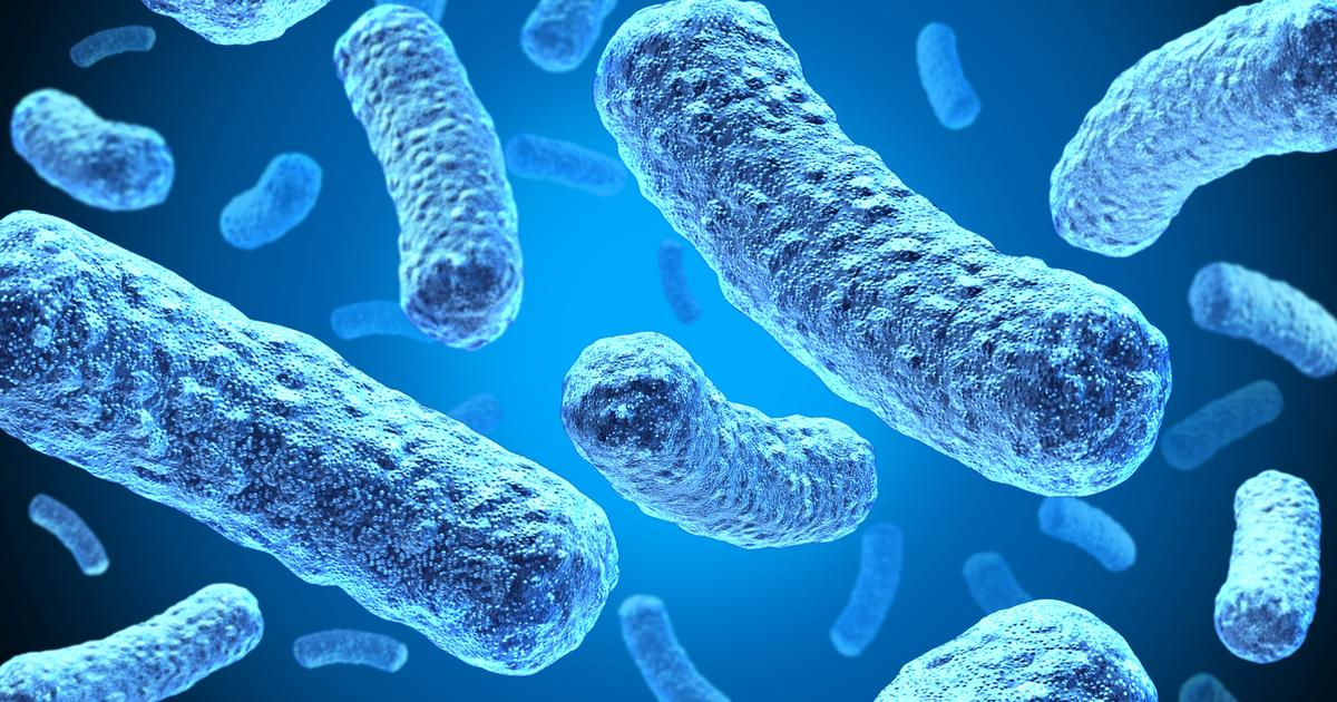 Biohybrid battery harvests energy from electric bacteria