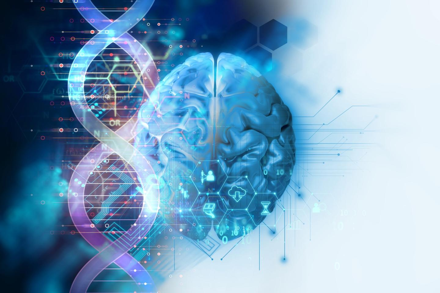 A newstudy suggests an Alzheimer's-related gene could impact cognition at a much younger age thanpreviously thought