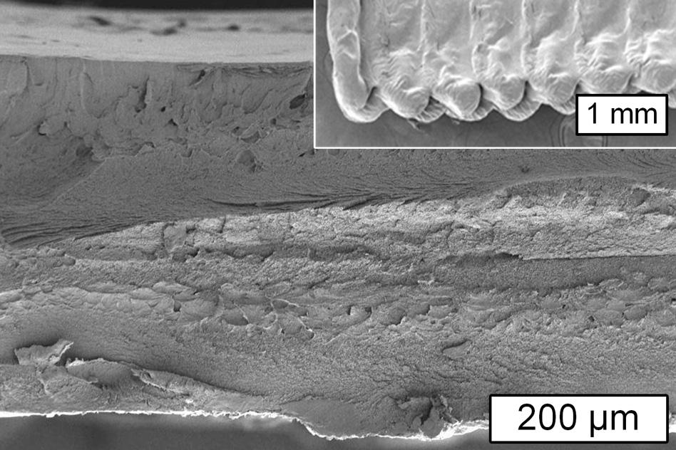 This image from a scanning electron microscope shows a cross section of an object printed using cellulose and the inset shows the surface of the object