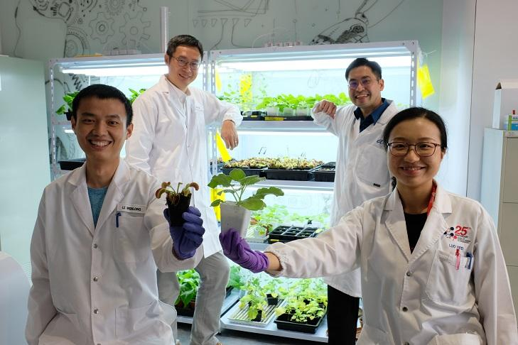 Scientists at Nanyang Technological University, Singapore have developed a new electrode that can act as a communication device for plants