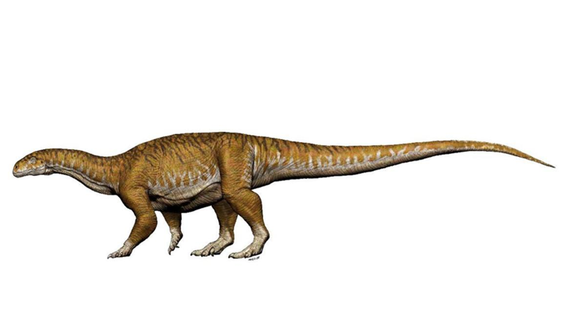 At about 10 tons, Ingentia prima was the  first giant dinosaur