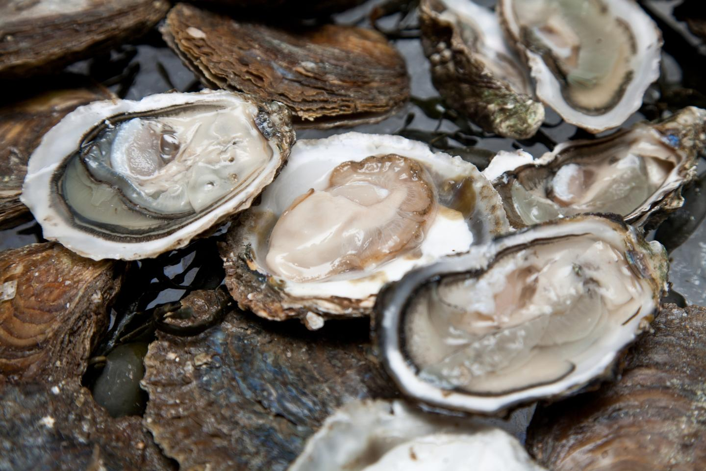 "Oysters are already nutritious, but a diet of the ""vitamin bullets"" reportedly makes them even more so"