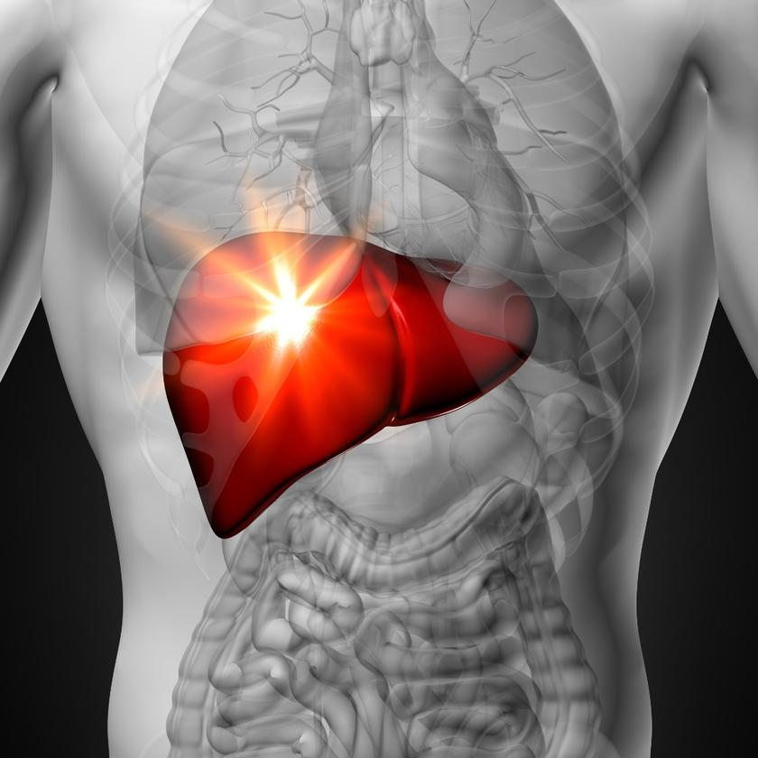 A new cell, found in adult human livers, is like a fetal stem cell, with the capacity to develop into mature liver cells and regenerate damaged cells in the organ