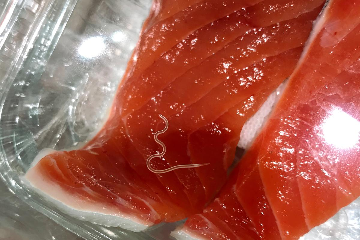 An Anisakis worm in a piece of raw salmon
