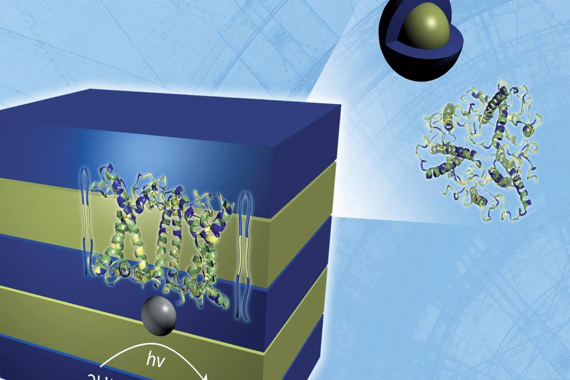 Neutron scattering analysis reveals the lamellar structure of a hydrogen-producing, biohybrid composite material formed by the self-assembly of naturally occurring, light harvesting proteins with polymers