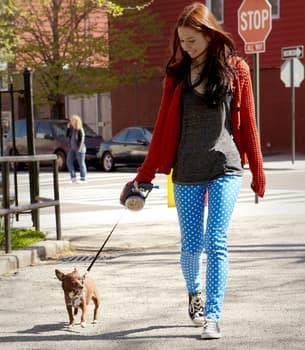 The Smart Dog Leash