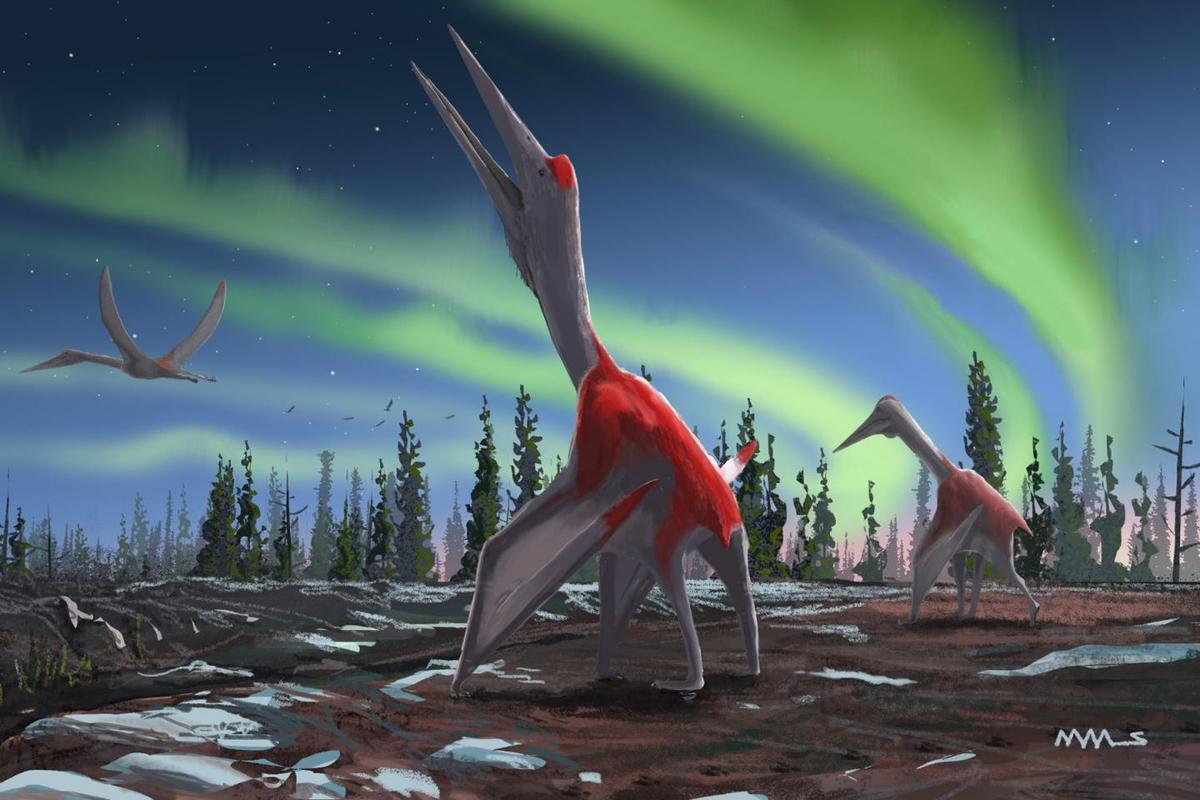 Cryodrakon boreas is known mainly from a partial juvenile skeleton that includes the wings, legs, neck and a rib