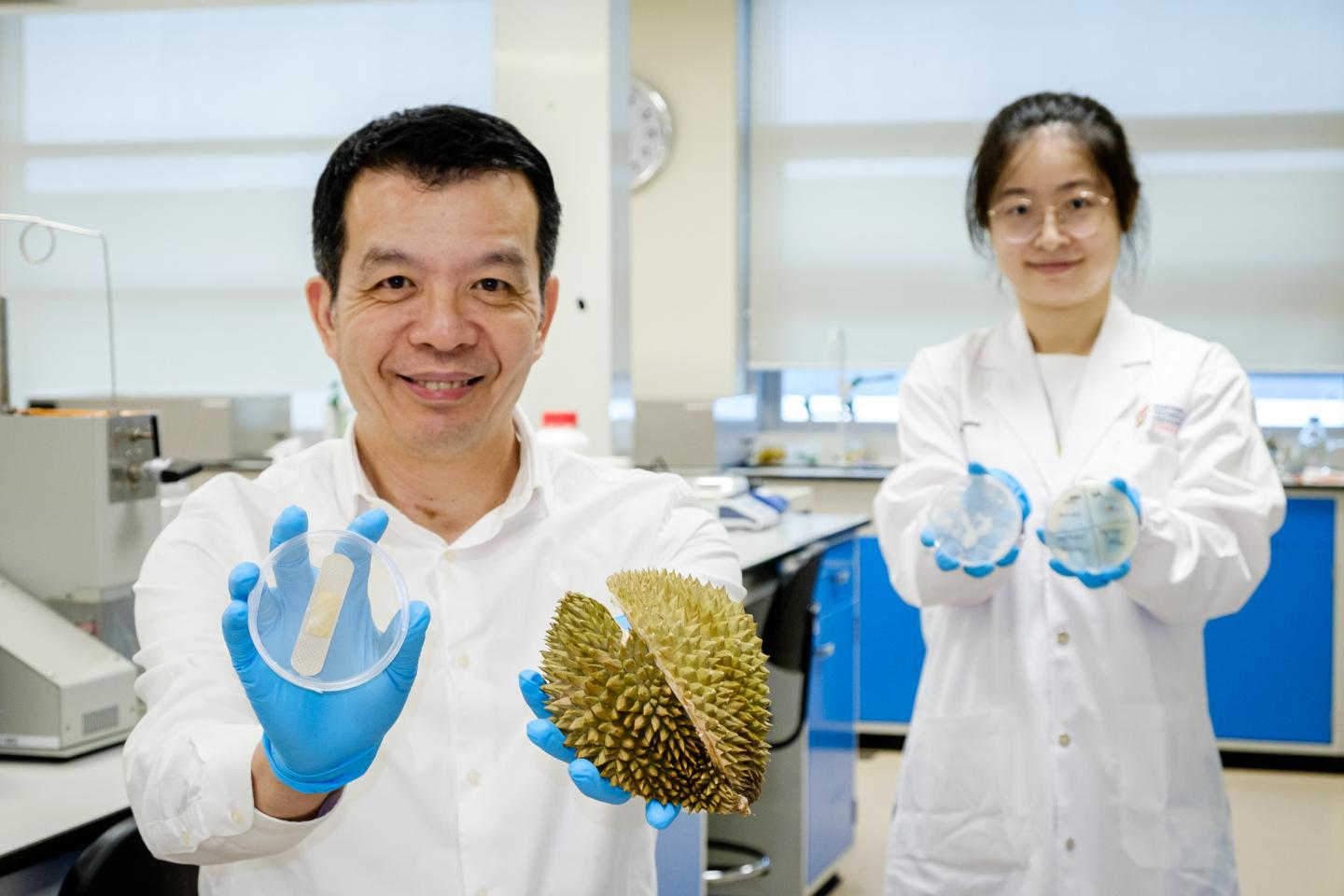 Prof. William Chen (left) holds up one of the hydrogel bandages and a durian husk, while PhD student Cui Xi displays agar plates showing the dressing's antibacterial effect
