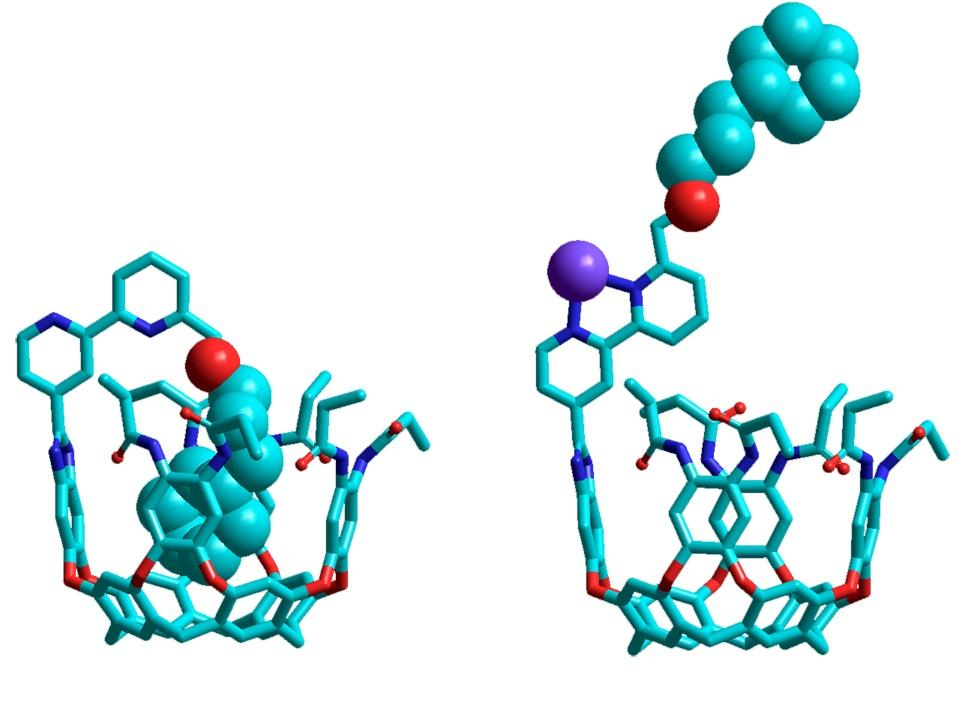 The ouroborand molecule in its closed (left) and open (right) states
