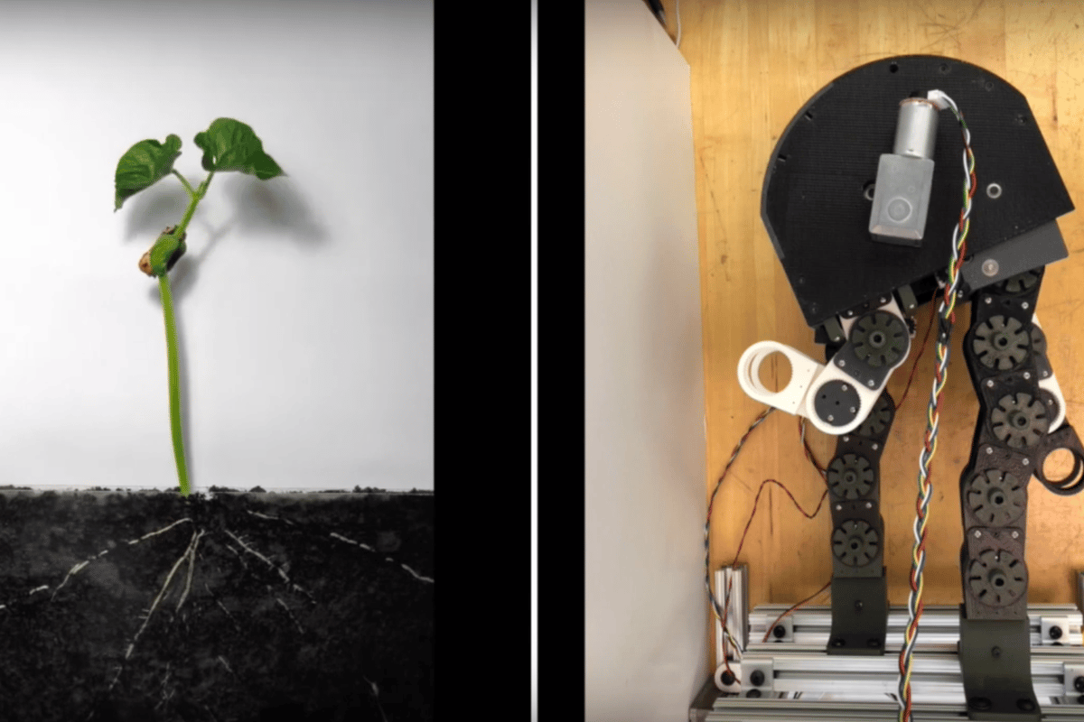 "The robot can ""grow"" in different ways to suit different tasks"
