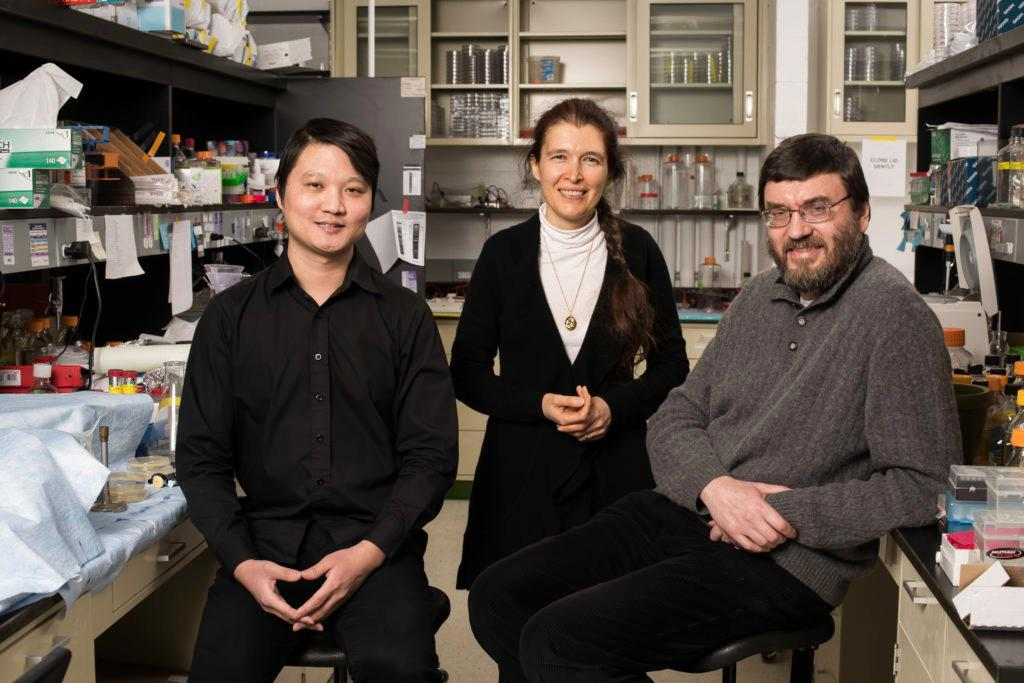 The Rochester researchers who worked on the project, from let: Yang Zhao, Vera Gorbunova and Andrei Seluanov