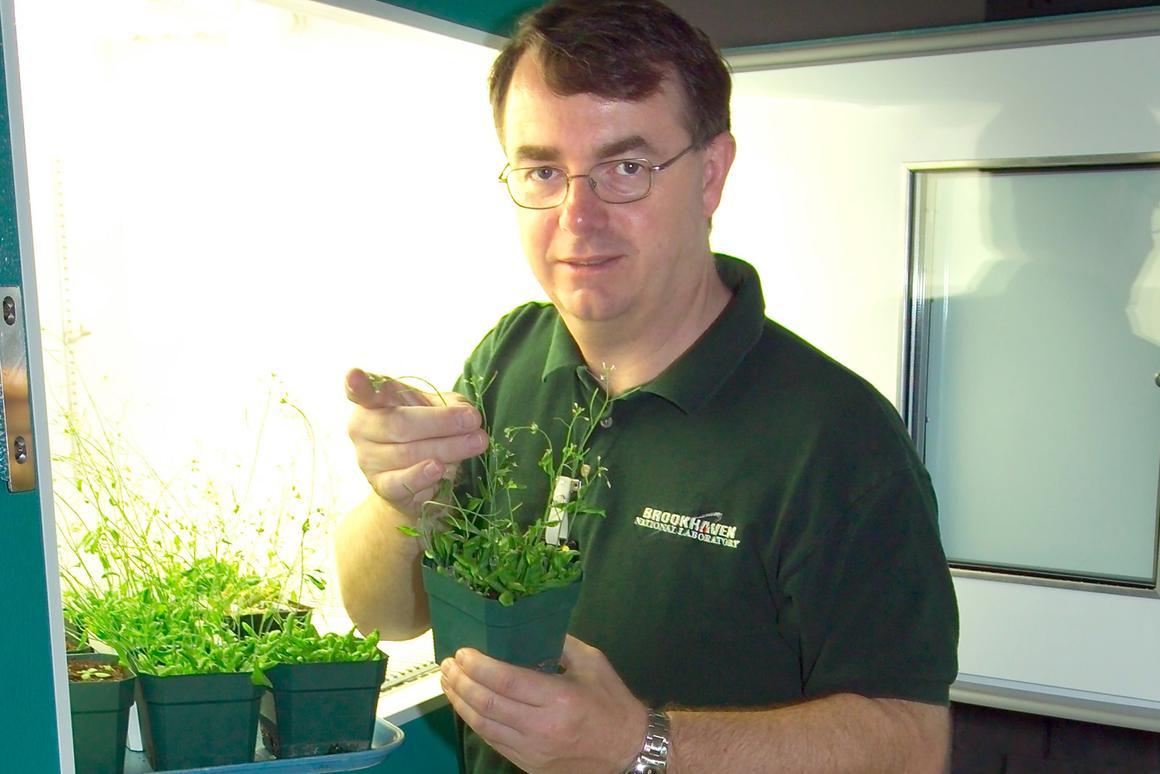 John Shanklin with the engineered plastics feedstock species Arabidopsis