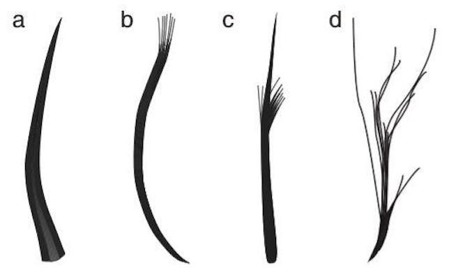The four feather types