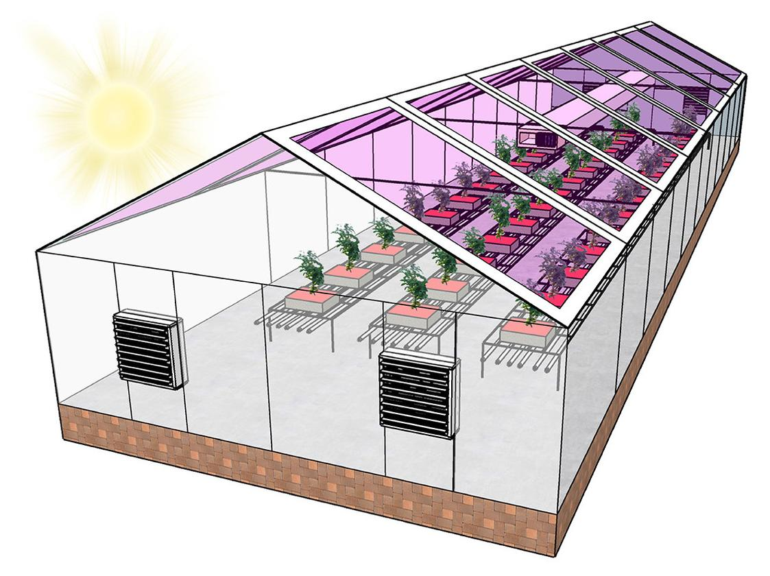 A diagram of a greenhouse with organic solar cells built into the glass panels in the roof