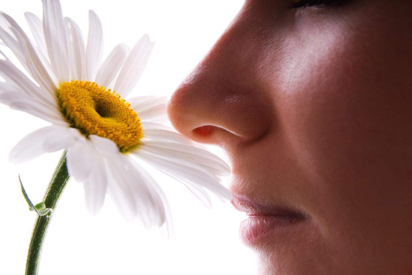 The neuroimaging study found our olfactory sense has a unique direct connection to the hippocampus, unlike all other senses