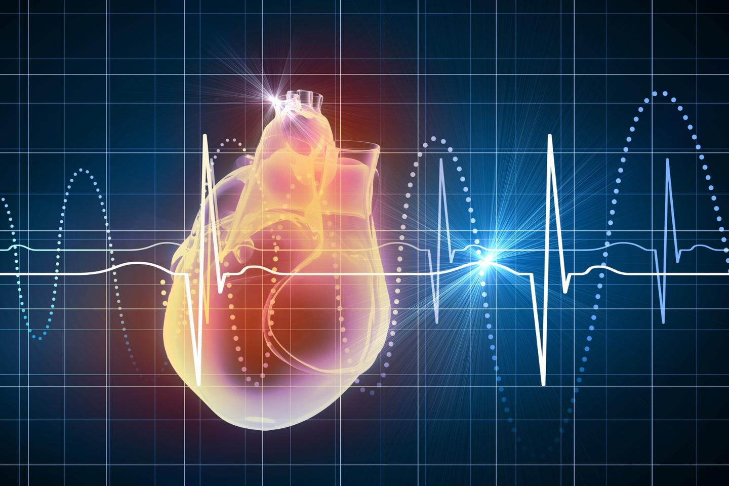 Heart muscle cells and supportive cells have been used together to help patch up broken hearts