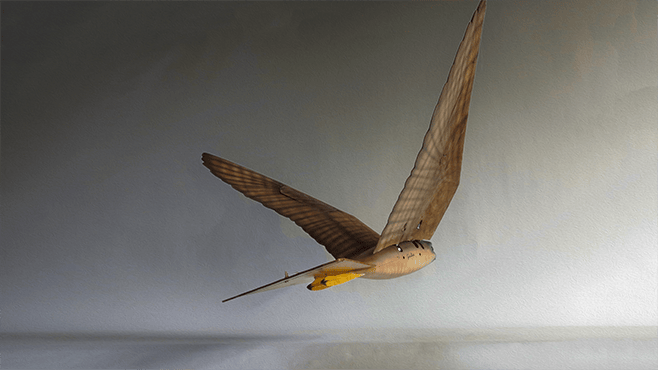 The flying raptor creations are the brainchild of Nico Nijenhuis from Clear Flight Solutions