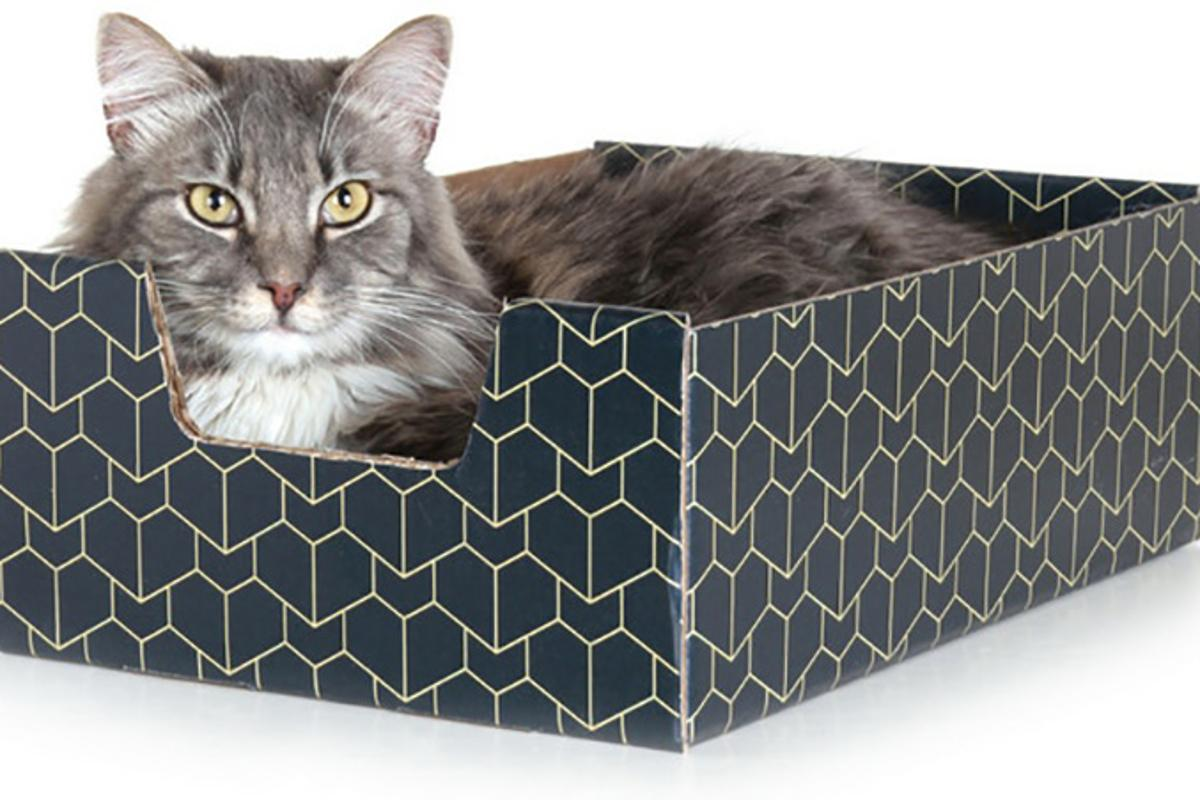 The Purrfect Pet Box is a pimped-out cardboard box for all your feline friends