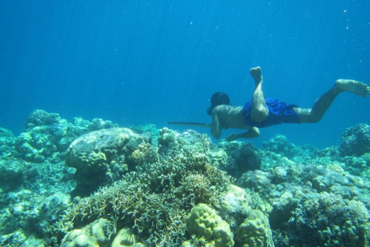 The Bajau people of Southeast Asia spend much of their time diving, and new research has found genetic evidence that they've evolved ways to hold their breath longer