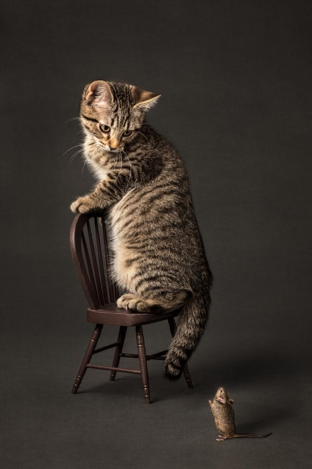Commended, Animals/Pets. 'Scaredy Cat'