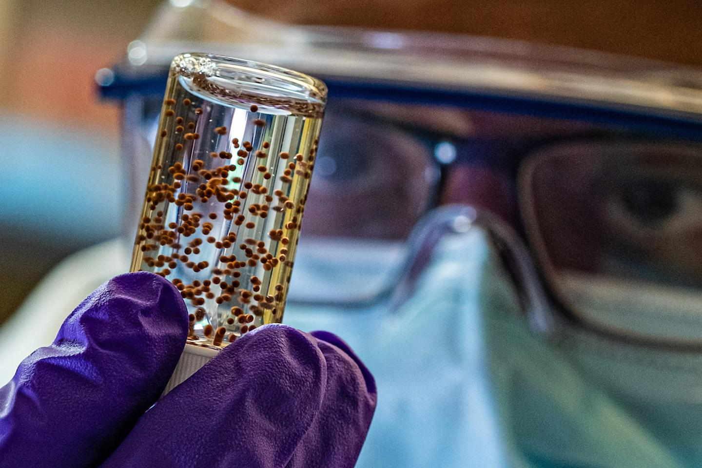 A vial of the stem cell capsules, which were implanted near the hearts of mice that had suffered heart attacks, and worked to heal the damaged tissue