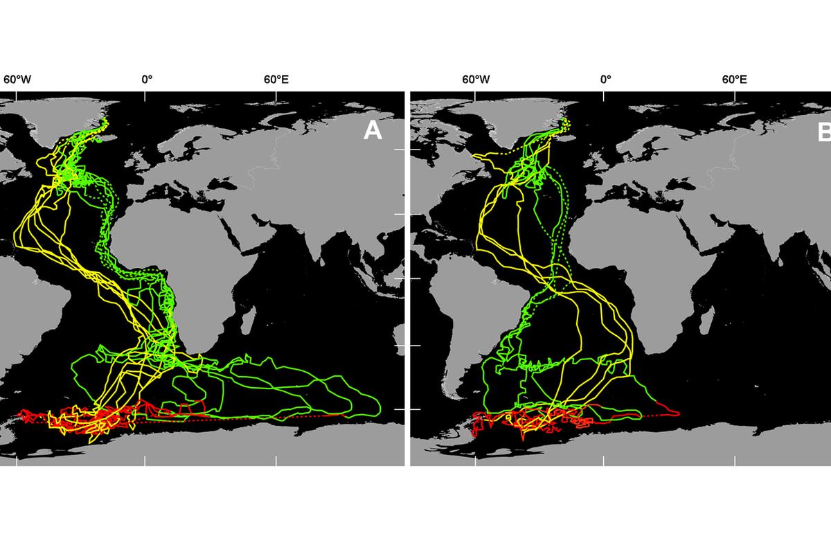 Interpolated geolocation tracks of 11 Arctic terns tracked from breeding colonies in Greenland (n = 10 birds) and Iceland (n = 1 bird). Green = autumn (postbreeding) migration (August/November), red = winter range (December/March), and yellow = spring (return) migration (April/May). Two southbound migration routes were adopted in the South Atlantic, either (A) West African coast (n = 7 birds) or (B) Brazilian coast. Dotted lines link locations during the equinoxes