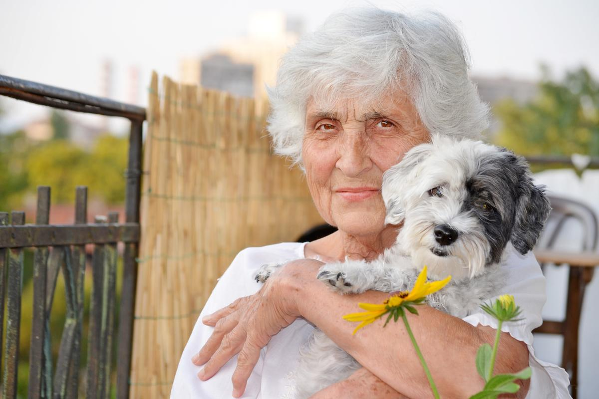 A sensor worn by dogs may assist in monitoring the seniors who own them (Photo: Shutterstock)