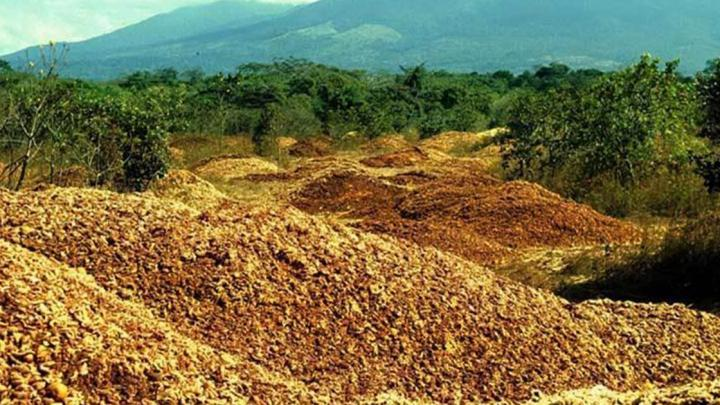 The land immediately after it was loaded with orange waste in the late 1990s