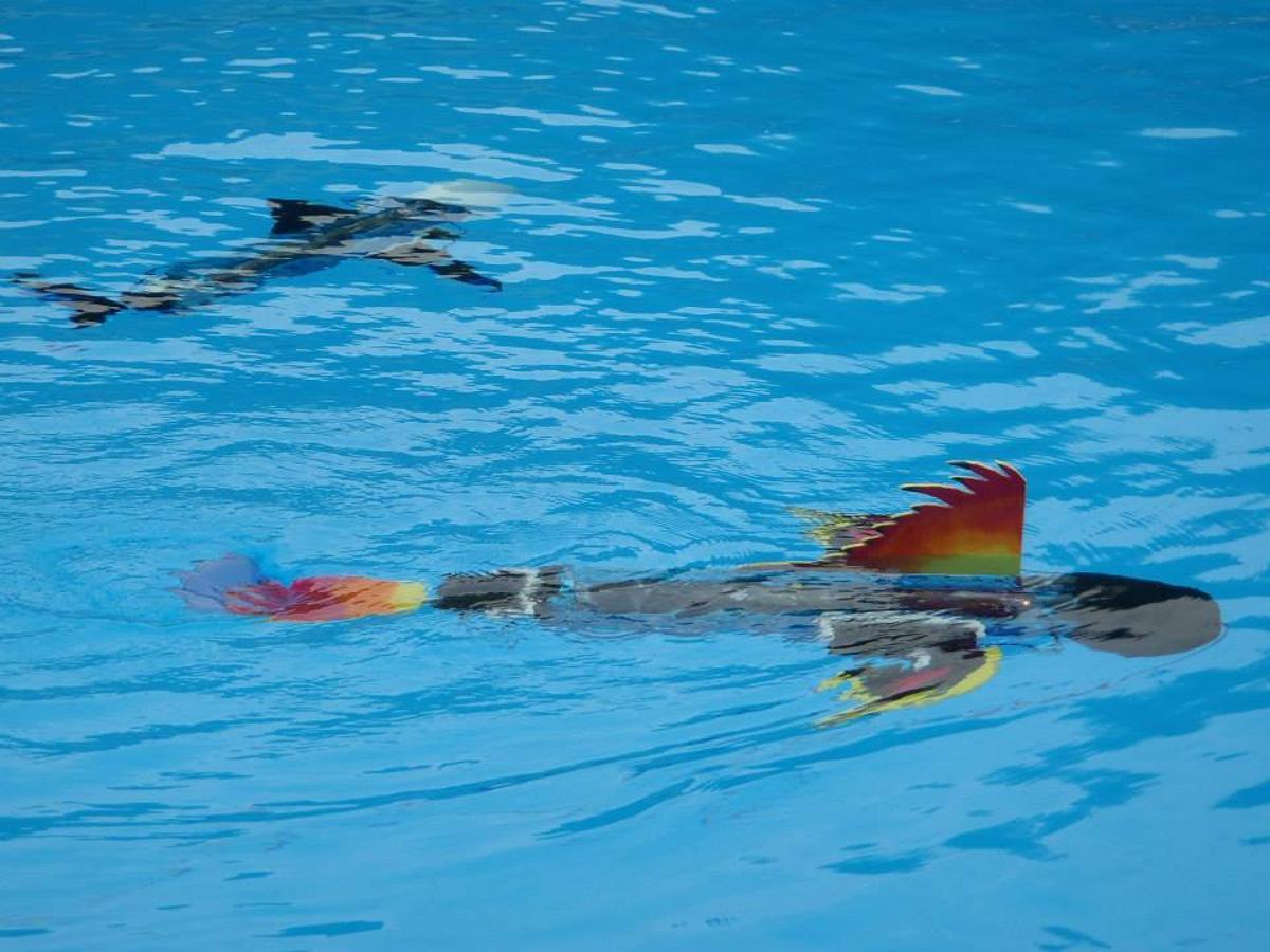 Students are encouraged to design their own robot fish with the naro-nanin edutainment program (photo: naro - nautical robots)