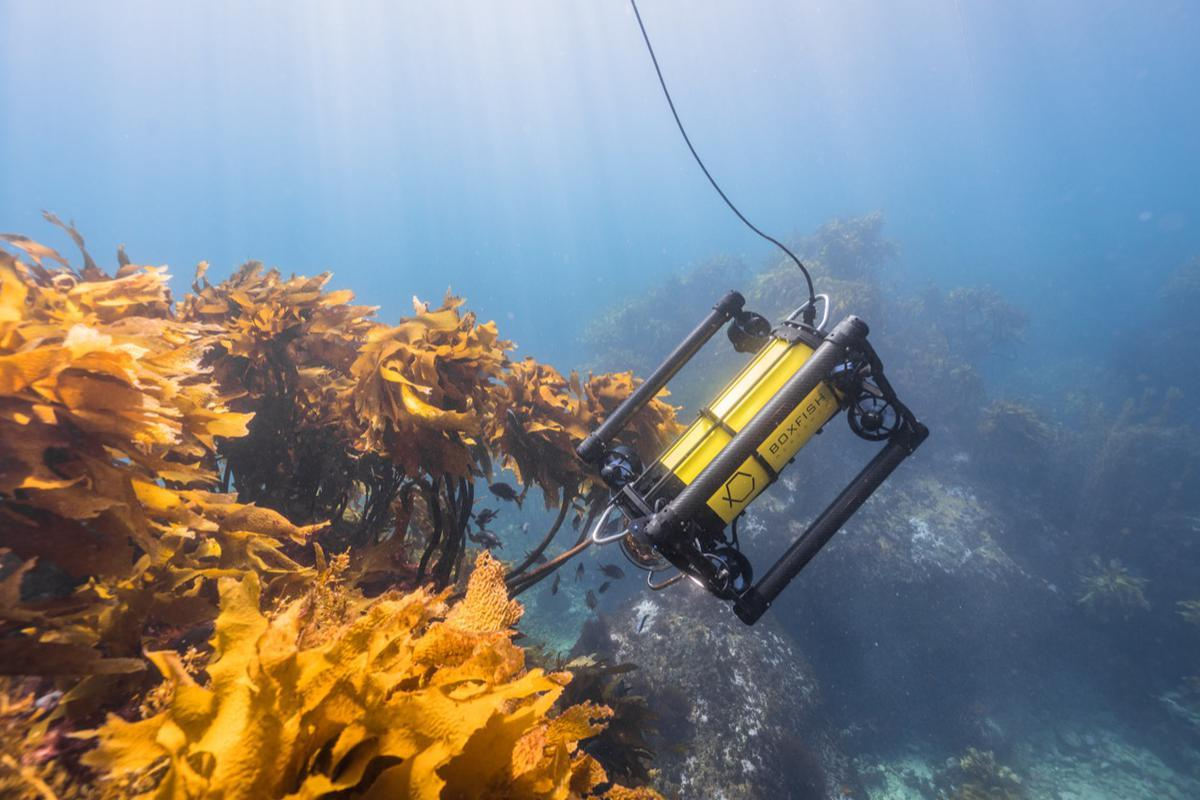 Boxfish ROV: cinema-grade underwater camera drone