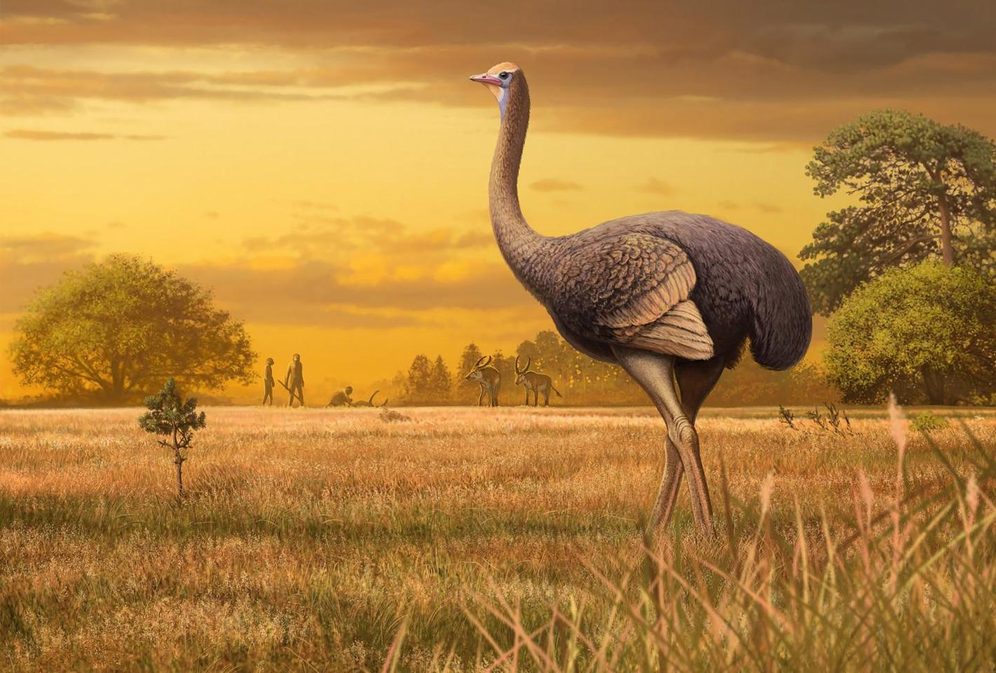 An artist's impression of Pachystruthio dmanisensis - fossils of this giant bird have been discovered in a cave in Crimea