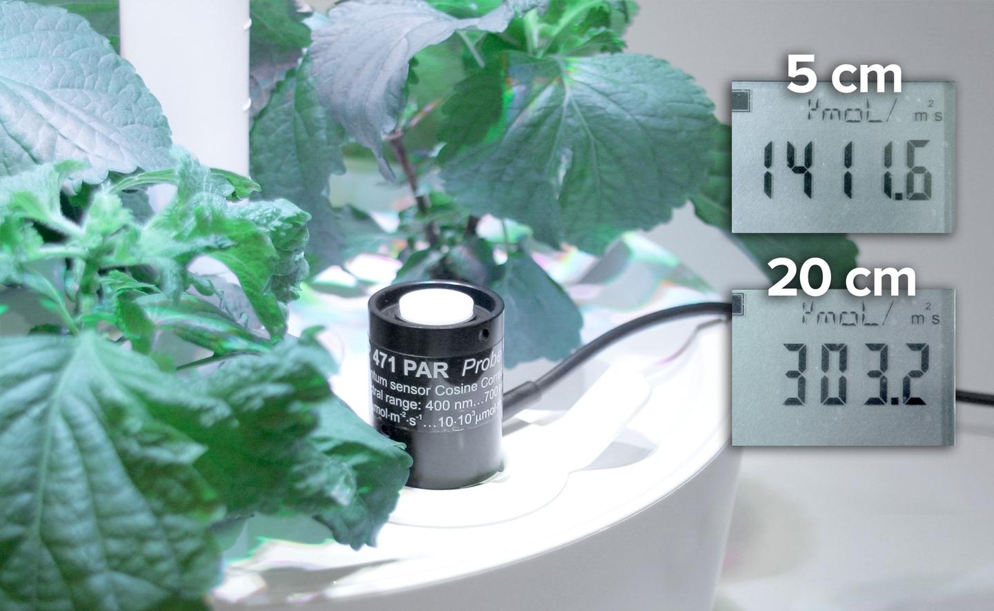 While the device can automatically adjust water and light according to the plant's growth, it allows the user to manipulate these settings to shape the final product