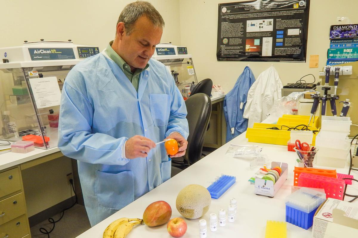 LLNL physical chemist George Farquar, who led the team that invented DNATrax, demonstrates how the product can be applied to food.