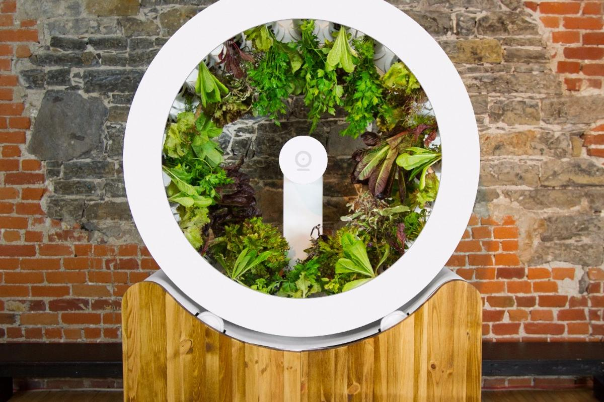The OGarden can reportedly handle up to 100 plants at once